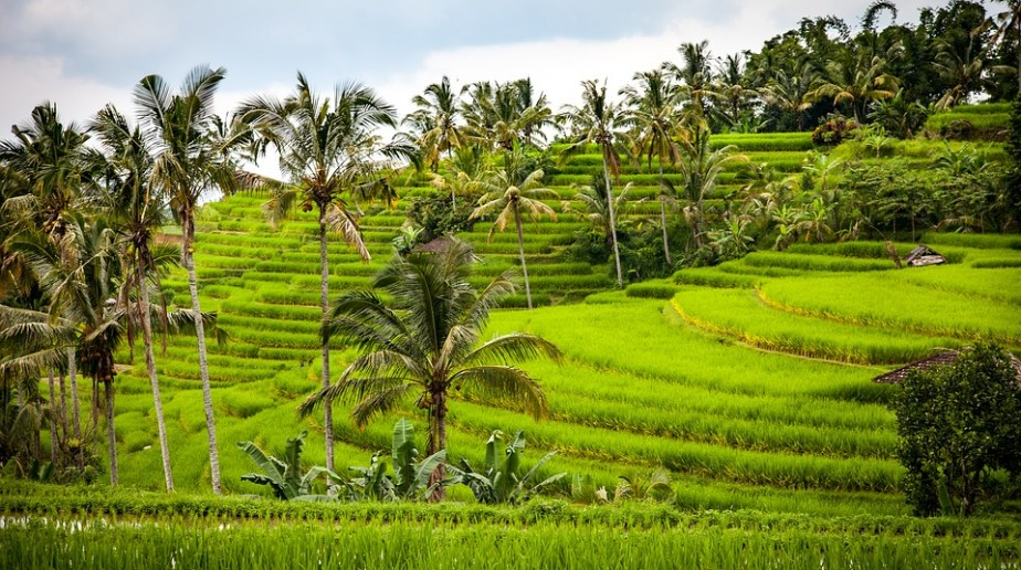 21 Jurusan Agribisnis Terbaik Di Indonesia Hastag Campus