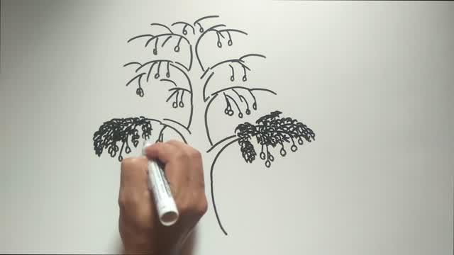 Contoh Soal Dan Materi Pelajaran 9 Contoh Soal Psikotes Gambar Pohon Dan Jawabannya